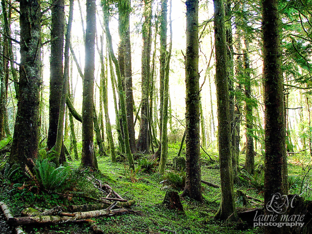 Sunlight breaking through trees on a lush forested headland on the Oregon Coast.