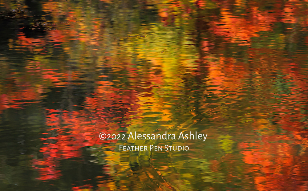 Rippled pond surface with reflections of trees at peak of autumn color.