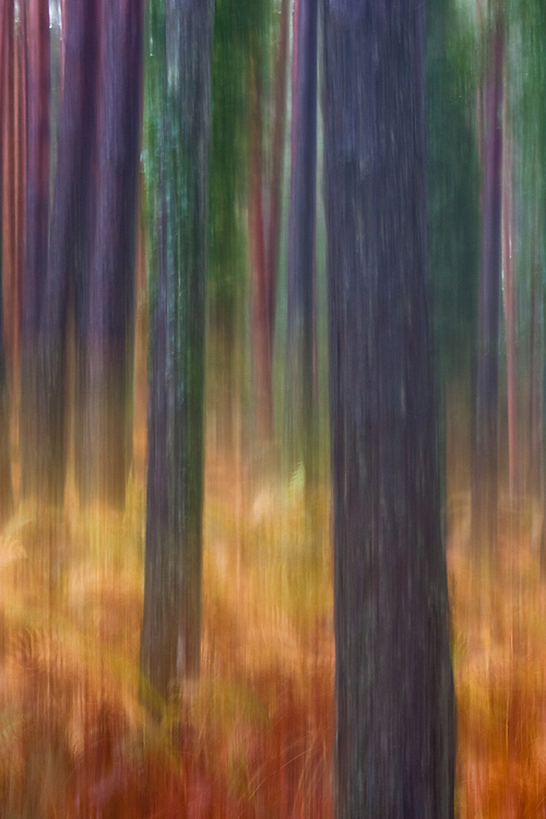 Abstract rendition of pine trunks with orange ferns