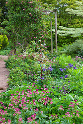 Astrantias and aquilegia in Alice's garden at Glebe Cottage in May