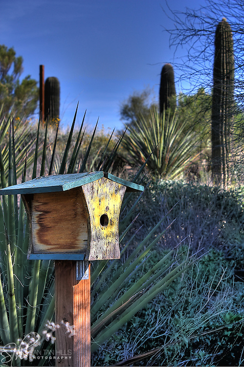 A colorful birdhouse at the Riparian preserve in Gilbert, AZ