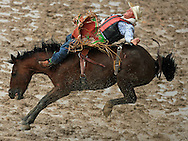 Bareback Rider HEATH EDWARD FORD scores 74 points while riding 57 CLEAN WATER JK, 28 July 2007, Cheyenne Frontier Days