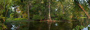 Lake Martin Panoramic, Lake Martin Swampscene