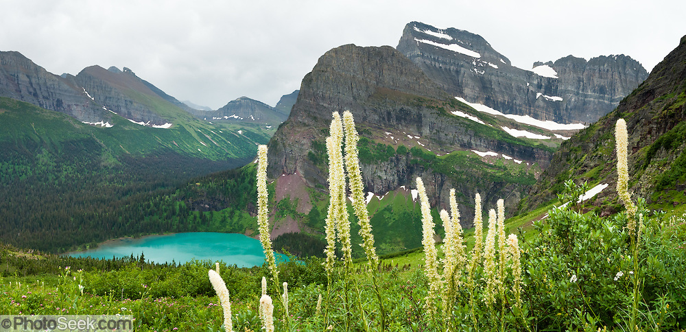 "Angel Wing and Mount Gould tower over blue-green Grinnell Lake and bear grass on the Grinnell Glacier Trail in Glacier National Park, Montana, USA. Bear grass (Xerophyllum tenax, or synonym Helonias tenax) is a grasslike perennial in the family Melanthiaceae, closely related to lilies. Bear grass (also called squaw grass, soap grass, quip-quip, and Indian basket grass) thrives after fire clears surface vegetation. Since 1932, Canada and USA have shared Waterton-Glacier International Peace Park, which UNESCO declared a World Heritage Site (1995) containing two Biosphere Reserves (1976). Rocks in the park are primarily sedimentary layers deposited in shallow seas over 1.6 billion to 800 million years ago. During the tectonic formation of the Rocky Mountains 170 million years ago, the Lewis Overthrust displaced these old rocks over newer Cretaceous age rocks. Glaciers carved spectacular U-shaped valleys and pyramidal peaks as recently as the Last Glacial Maximum (the last ""Ice Age"" 25,000 to 13,000 years ago). Of the 150 glaciers existing in the mid 1800s, only 25 named glaciers remain in the park as of 2010, and all may disappear as soon as 2020, say climate scientists. (Panorama stitched from 3 overlapping images.)"