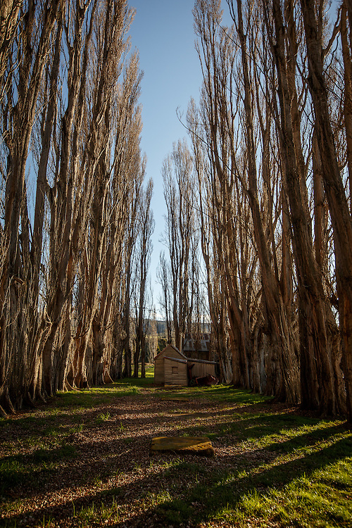 Redlands Estate Distillery in Plenty, Tasmania, August 25, 2015. Gary He/DRAMBOX MEDIA LIBRARY