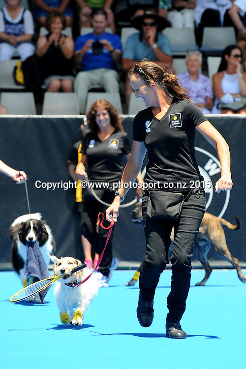 ASB Bank Ball Dogs on Day 3 of the ASB Classic Women's International. ASB Tennis Centre, Auckland, New Zealand. Wednesday 7 January 2015. Copyright photo: Chris Symes/www.photosport.co.nz