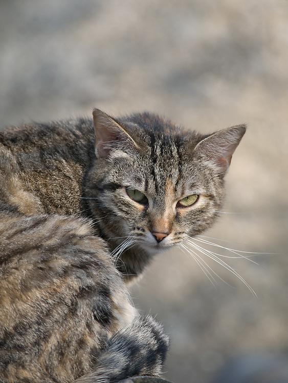 Haus- und Stra&szlig;enkatze Speedy.<br /> <br /> Street- and housecat Speedy.