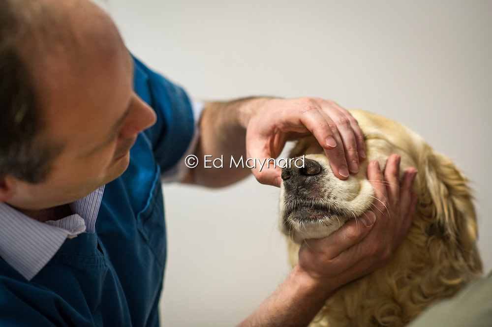 Veterinary surgeon checking the nose and muzzle of a dog.<br /> Rushcliffe Veterinary Centre, West Bridgford, Nottingham NG2 7LR.<br /> Photo: Ed Maynard<br /> 07976 239803<br /> www.edmaynard.com