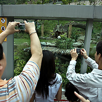 Taiwanese people watch the two giant Pandas gave as a present for the Chinese government at the Pandas zoo in Taipei, Taiwan, on Tuesday  May 19,2009/ Photographer: Bernardo De Niz/