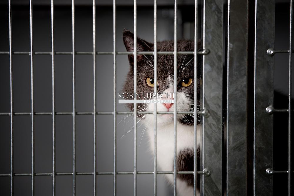dierenbescherming serie asiel  copyright robin utrecht