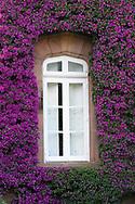 Purple bougainvillea surround this beautifully encased stone window in northern Spain
