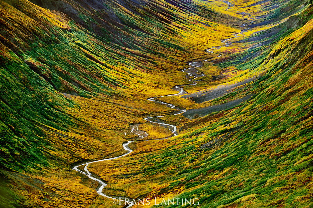 Fall colors in tundra valley, Wrangell-St. Elias National Park, Alaska, USA