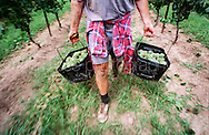 2013Copyright Jim Rice &copy;2013.<br />
