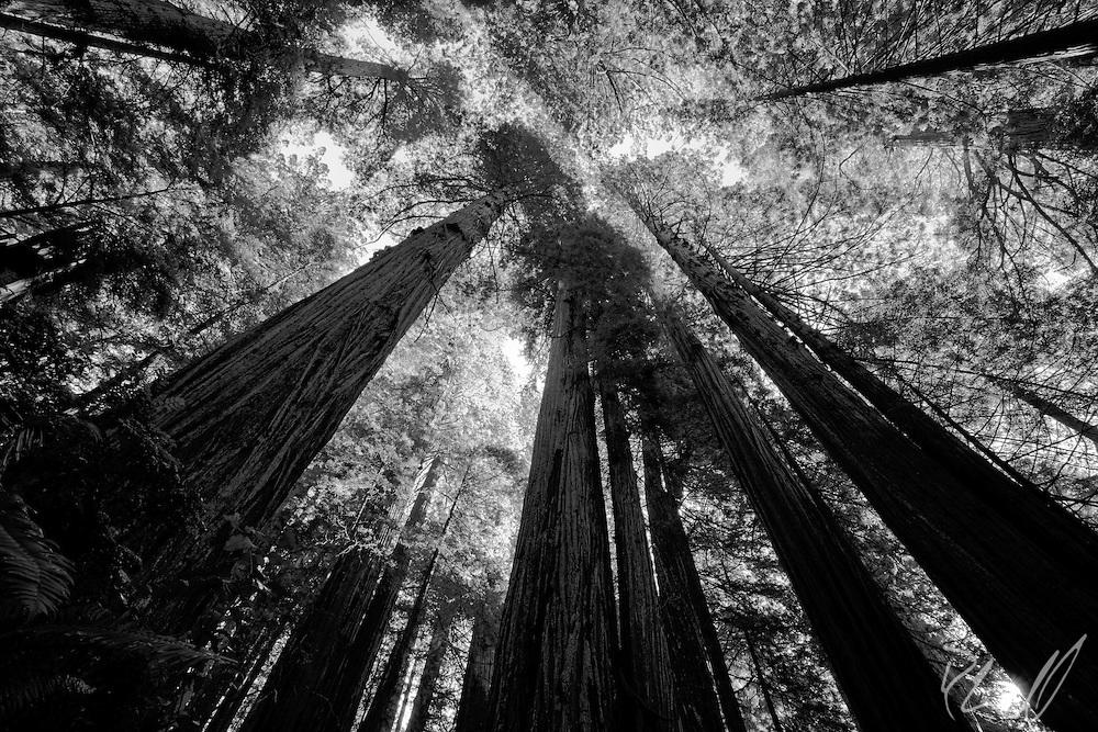 Redwoods | Northern California