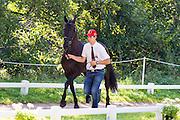 Edouard Simonet, (BEL), Dark Dream, Maximus, Topspeed Bauke, Topspeed Sanne, YK Topspeed Long Beach - Horse Inspection Driving - Alltech FEI World Equestrian Games™ 2014 - Normandy, France.<br /> © Hippo Foto Team - Leanjo de Koster<br /> 25/06/14