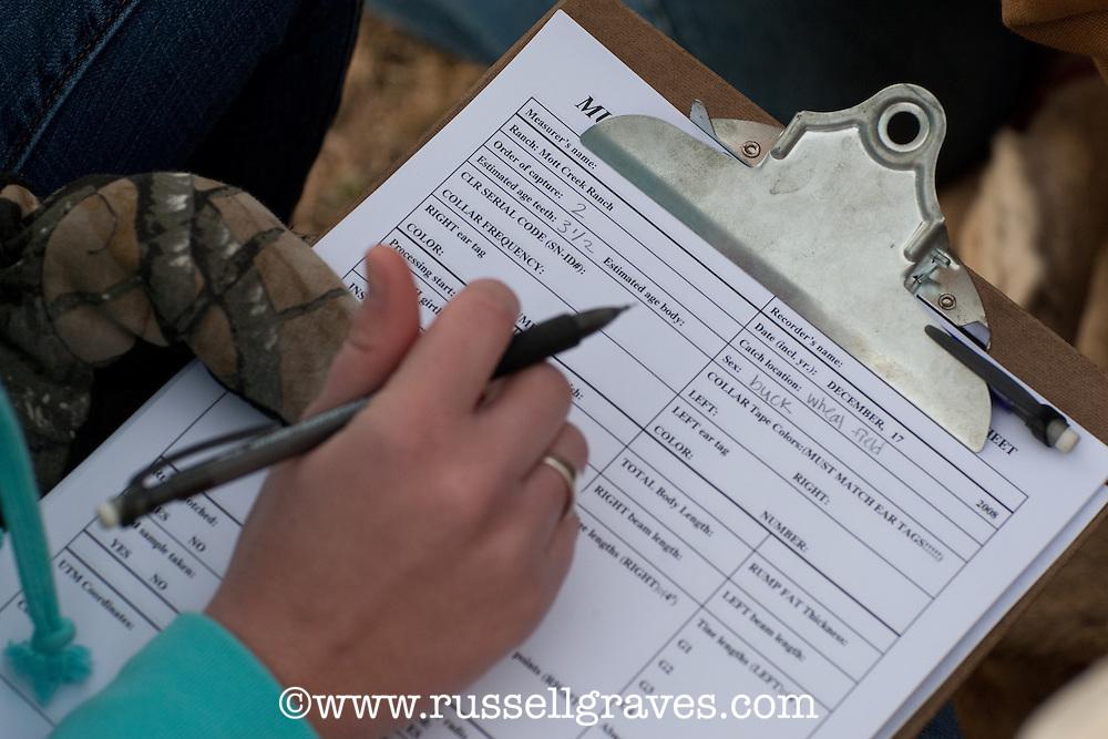 MULE DEER RESEARCHER TAKING NOTES