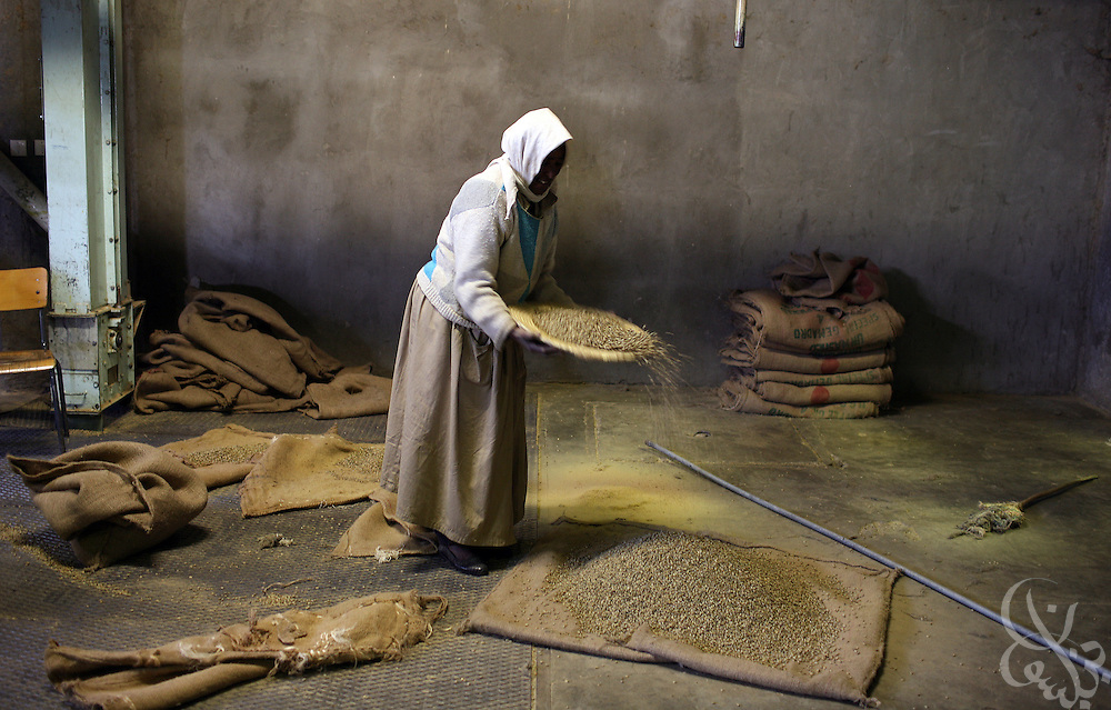 An Ethiopian worker collects spilled green coffee beans in the giant warehouse of the Keffa Export Coffee Processing Plant February 21, 2007 in Addis Ababa, Ethiopia.  Ethiopia exports more than 120,000 metric tons of green coffee beans per year, and one in four Ethiopians is employed within the coffee business.