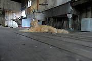 orange cat lying on dirty wooden floor