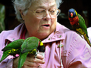 Betty Minten shares a little nectar with some friendly lorikeets at the Oregon Zoo. The attraction is one of a few which allow people to have personal contact with the animals.