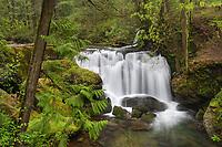 Whatcom Falls, Whatcom Falls City Park, Bellingham Washington