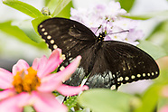 20170525 Butterfly Release - Chatfield Farms