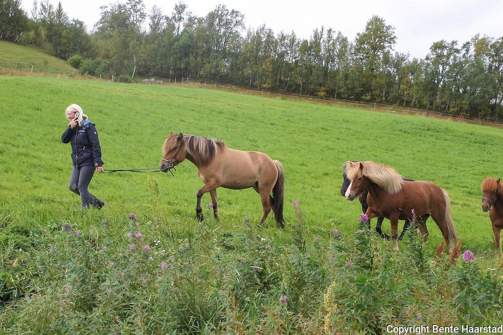 An-Magritt Morset, driver oppdrett med islandshester i Stugudal i Tydal