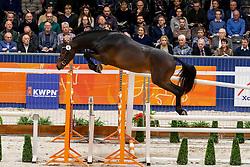 006, Larezzo<br /> KWPN Hengstenkeuring - 's Hertogenbosch 2019<br /> © Hippo Foto - Dirk Caremans<br /> 31/01/2019