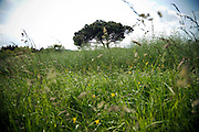 low angle view of grass land with tree