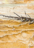 A dead tree lying on the travertine terraces of Mammoth Hot Springs, Yellowstone National Park, Wyoming, USA.
