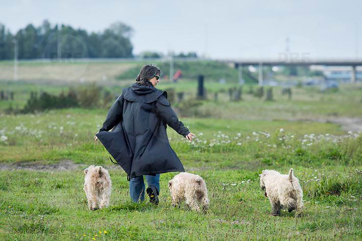 Nederland Delft 17-09-2010 20100917     A4 Delft - Schiedam wordt definitief verlengd,  er  is begin deze maand officieel besloten tot de aanleg van het stuk snelweg waarover zo'n vijftig jaar is gesproken. Natuurgebied dat in de toekomst zal moeten wijken na het doortrekken van de A4, vrouw laat haaar honden uit. Rijkswaterstaat en het ministerie van VWS hebben dat laten weten.Over de nieuwe verkeersader wordt al decennialang gesteggeld, vooral omdat de weg het natuurgebied Midden-Delfland doorboort...De zeven kilometer asfalt tussen Delft en Schiedam doorkruist straks verdiept of via een tunnel het natuurgebied tussen de twee steden. Het belangrijkste pluspunt is dat de A13 wordt ontlast. Op rijksweg A13 staat dagelijks de voor de economie schadelijkste file van Nederland. Met het project A4 Delft-Schiedam willen lokale en regionale overheden en het Rijk de problemen rond bereikbaarheid en leefbaarheid op en rond de A13 en de A4 Delft-Schiedam oplossen. Midden Delftland. , provinciale, realisatie, realiseren, recreatie, recreeren, regionale overheden, relax, relaxed, relaxen, relaxing, rijbaan, rijbanen, route, ruimte, ruimtelijk, ruimtelijke, ruimtelijke omgeving, ruimtelijke ordening, Ruimtelijke plannen, ruimtelijke planning, ruimtelijke visie, ruraal, rurale omgeving, rustiek, rustieke, rustieke omgeving, rustig, rustige, space, spare time, spoor, stedelijke vernieuwing, stil, streekplan, sunny, terrein, The Netherlands Holland Nederland, toekomst, toekomstige plannen, toekomstplannen, tracé, traject, uitgestrektheid, verbinding, verbindingen, vergezicht, vergezichten, verkeer en vervoer, verkeer en waterstaat, verkeersnet, verlengen, vernieuwing, vervoer, vewezenlijken, vrije tijd, vrouw, vrouwen, walking the dog, wandelen, wandelingetje maken, wegenbouw, wegenbouwplanologie, wegennet, wegnet, wegverbinding, wei, weide, weidegang, weiland,