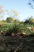extreme low angle view of grass and trees