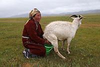 Mongolie. Province de Tov. Campement nomade. Vie quotidienne chez les nomades. Traite des chèvres. // Mongolia. Tov province. Time for milk.