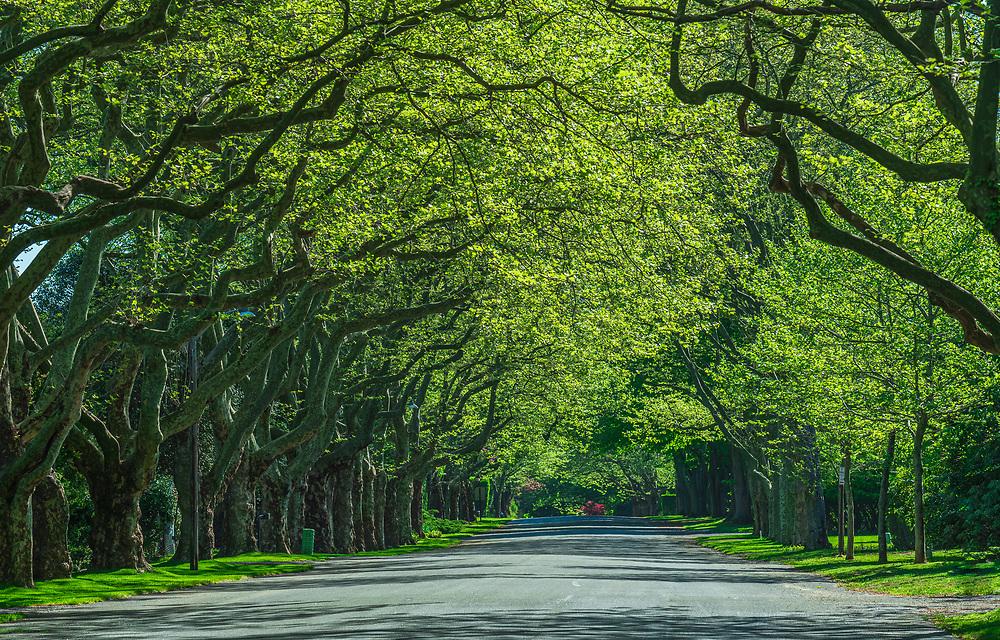 Tree Covered Street, East Hampton, NY