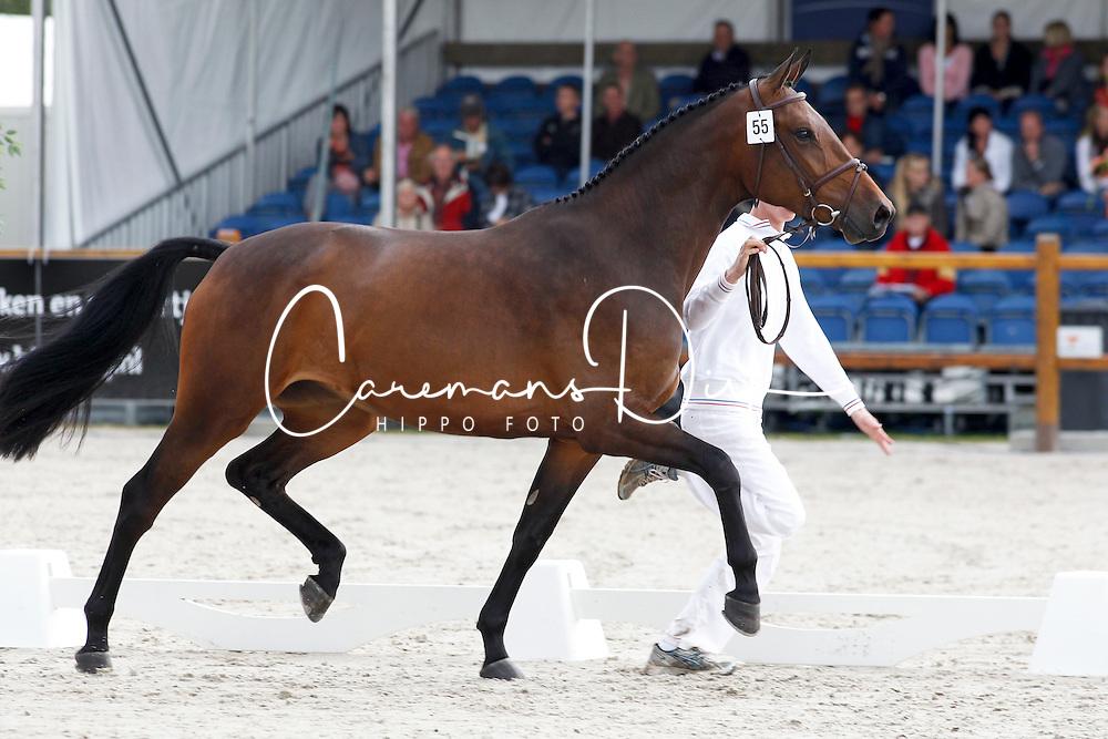 055 - Coocanusa<br /> KWPN Paardendagen Ermelo 2010<br /> © Dirk Caremans