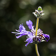 Tucson Spring Flowers