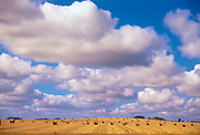 Bales and cumulus clouds. Shellbrooke, Saskatchewan. Canada