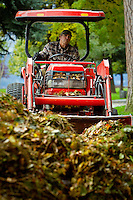 Sam Lapresta, with the City of Coeur d'Alene Parks Department, pushes a pile of leaves with a tractor Tuesday as crews begin their leaf collection efforts in City Park.