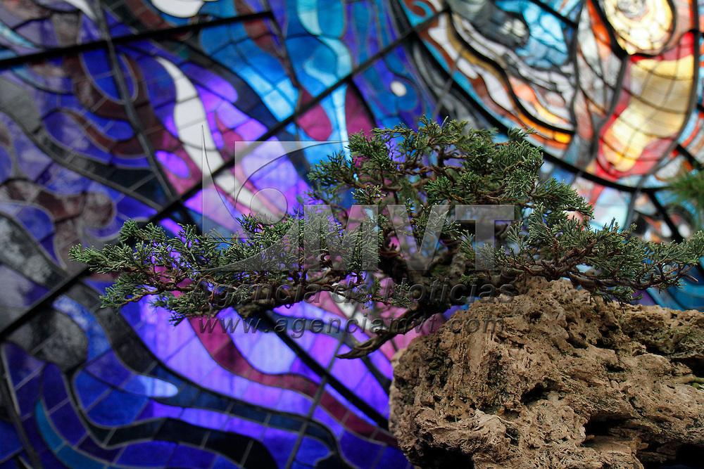 Toluca, México.- Por cuarto año consecutivo se instalo la exposición Pasión por el Bonsái, en donde se muestran diversas especies de árboles trabajados con esta técnica,  el Jardín Botánico del Cosmovitral es el escenario para esta muestra. Agencia MVT / Crisanta Espinosa