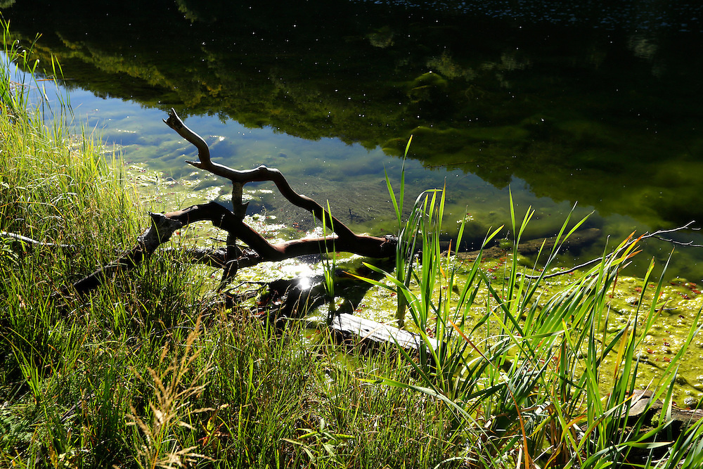 A tree branch, sunlight and aquatic plants at Donje Bare lake, Zelengora mountain, Sutjeska National Park, Bosnia and Herzegovina.