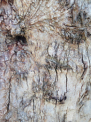 Bark Abstract, Maui, Hawaii, US