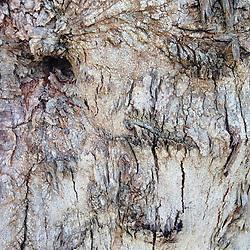 Bark Abstract, Maui, Hawaii, US
