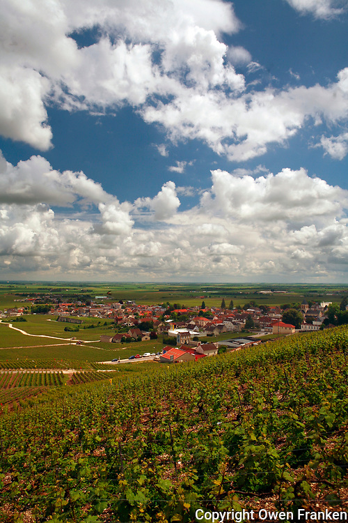 Vineyards in the village of Avize, near Epernay<br /> <br /> Avize is within the Champagne territory<br /> <br /> <br /> Photo by Owen Franken for the NY Times<br /> <br /> May 17, 2008