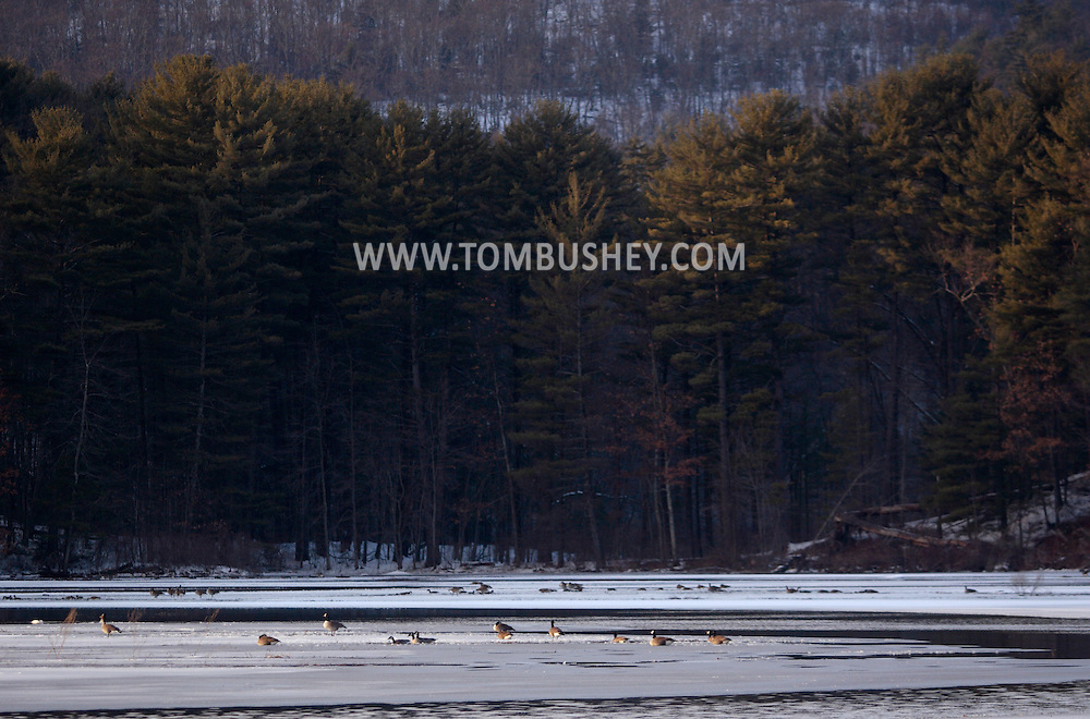 Mamakating, NY - Canada geese gather on the frozen Bashakill Wildlife Management Area on a late winter afternoon. March 1, 2008.