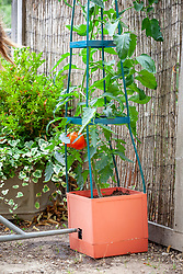 Tomato planter with watering hole/reservoir and stand