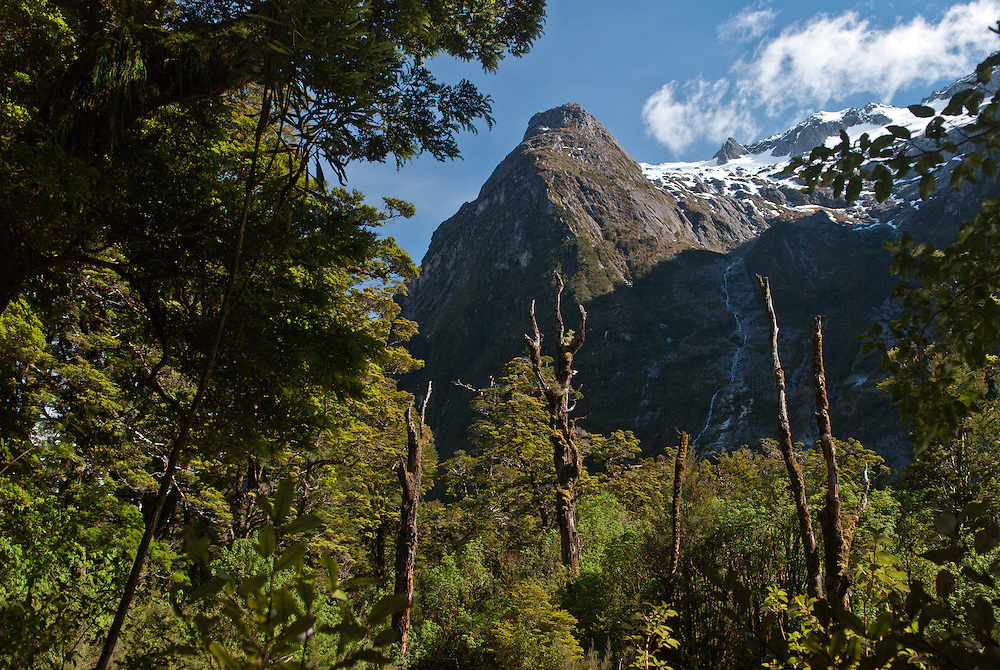 Hirere Falls visible through the branches of tall Beech trees under the glacial peaks of Clinton Canyon, Milford Track, Fiordland, New Zealand
