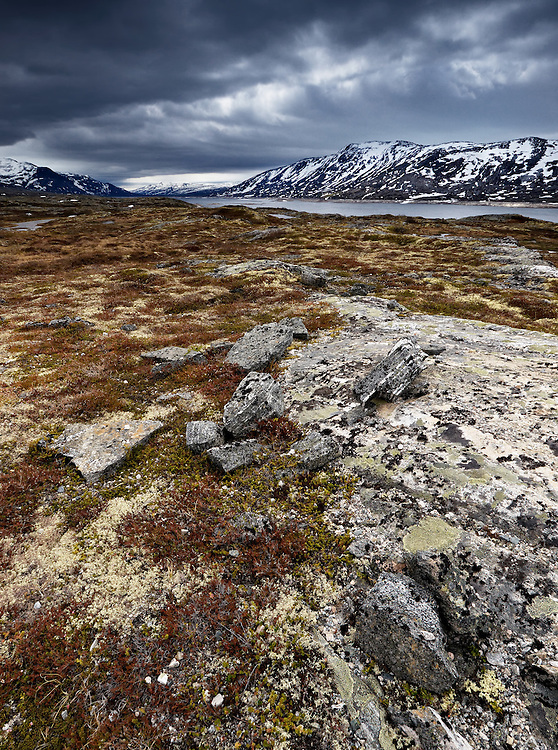 Norway - Dovre mountain plateau