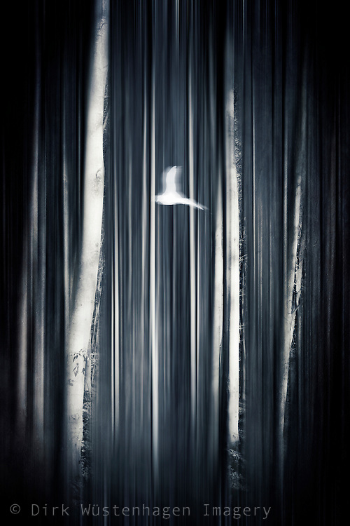 Abstraction of a bird flying through a forest<br />