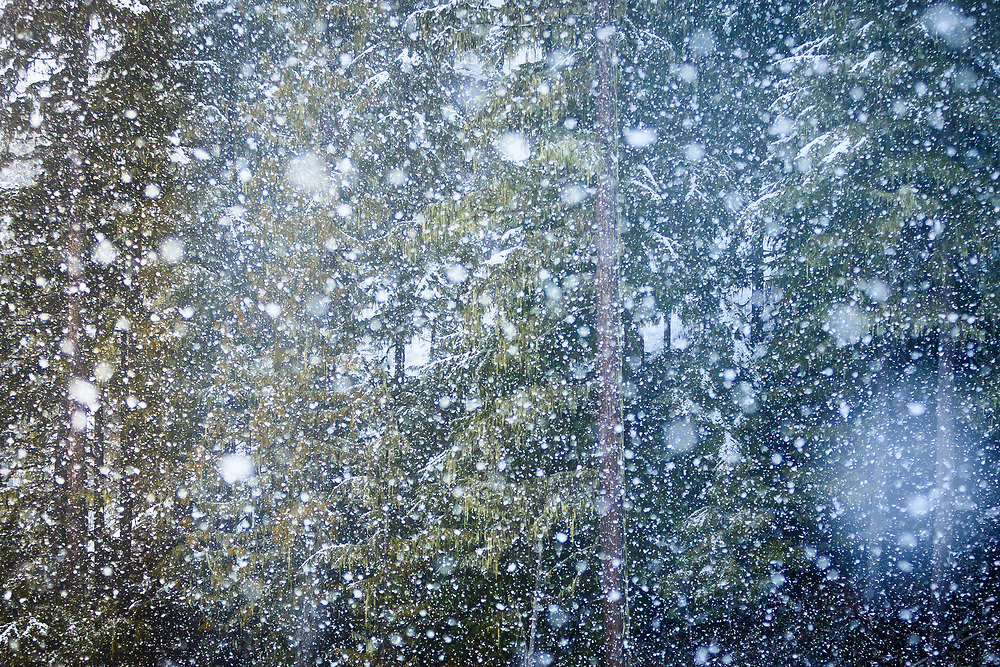 Winter snows cover the forest near Whistler BC.