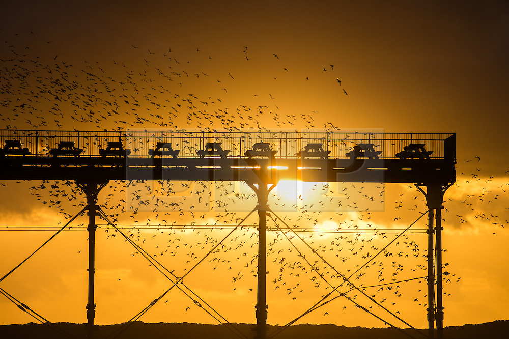 © London News Pictures. 25/01/2016 Aberystwyth, Wales, UK. Thousands of starlings take to the skies above Aberystwyth pier before settling for the night on the Victorian structure's cast-iron legs in a spectacular ritual repeated at sunset during autumn and winter. Each evening between October and March tens of thousands of the birds fly in huge 'murmurations; in the sky above the town before settling to roost for the night on the cast iron legs of the Victorian seaside pier. Aberystwyth is one of only a handful of urban starling roosts in the UK. Although plentiful in Aberystwyth, the starling is on the RSPB's 'red list' of endangered species in the UK Photo credit: Keith Morris/LNP