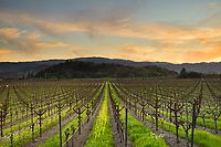 Silverado Trail Late Winter Sunset, Yountville, California
